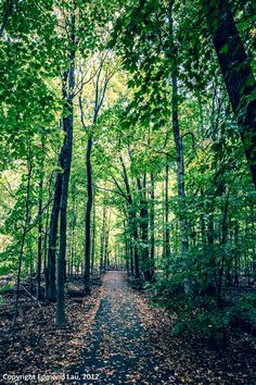 Green - Bronte Creek Park Oakville Ontario, Us Border, Jazz Festival, Under Construction, Niagara Falls, Parks, Highlights, Country Roads, Canada