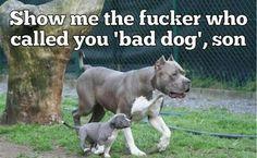 That's right ! #pitbull #love #theyneedlovetoo