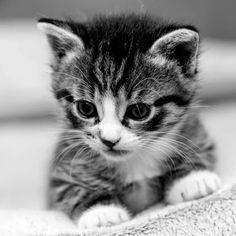 Słodki kotek.