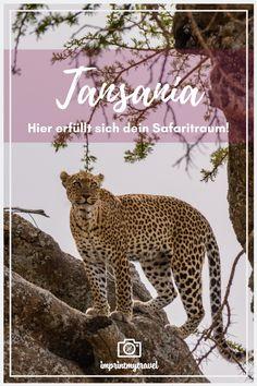 Du bist auf der Suche nach der perfekten Destination für deine Traumsafari? Dann empfehle ich dir, einen Blick auf Tansania zu widmen. Das Land in Ostafrika bezaubert mit seiner vielfältigen Tierwelt und einer landschaftlichen Traumkulisse. Was du bei der Planung einer Safari in Tansania beachten musst und welche Highlight auf dich warten, erfährst du in diesem Blogartikel. Kind, Tricks, Panther, Animals, Latin America, Adventure Trips, New Zealand, Family Vacations, Animales