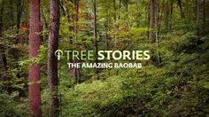 """This is """"Tree Stories - The Upside Down by Sarah Venter on Vimeo, the home for high quality videos and the people who love them. Tree Story, The Upside, Films, Amazing, Life, Movies, Cinema, Movie, Film"""