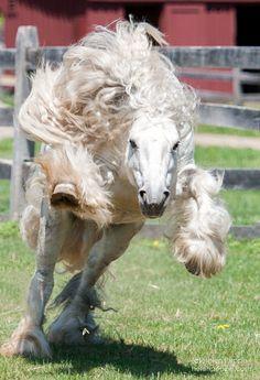 """Silver Lion"" Stunning Stallion! photographyissketch"