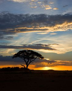 I look at this and the music score from 'Out Of Africa', begins to play through my head. Both are exquisitely beautiful. McC