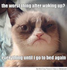Best Of Grumpy Cat meme - Likes
