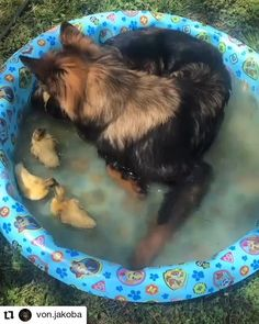 Pool party - Welcome to our website, We hope you are satisfied with the content we offer. Cute Funny Animals, Cute Baby Animals, Funny Dogs, Animals And Pets, Nature Animals, Wild Animals, Funny Memes, Funny Dog Videos, Cute Puppies