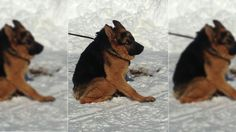 Quasimodo is a short-spined dog that got a second chance