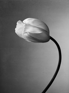 Flowers black and white photography nature floral 18 trendy Ideas Black And White Flowers, Black And White Pictures, Black White, Photography Women, Nature Photography, Photography Flowers, Art Of Love, Amazing Flowers, Flowers In Hair