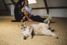 #photographie #photography #seanceengagement #engagement #couple #love #photographe #photographer #france #nord Engagement Couple, France, Cats, Animals, Photography, Gatos, Animales, Animaux, Animal