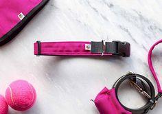 Pretty in pink 💃🏽// Wildebeest #Wolvesofwellington #dogcollar #doglead