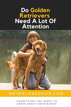 Do Golden Retrievers Need A Lot Of Attention? - Retriever Advice - Golden Retrievers, Labrador Retrievers, Chesapeake Bay Retriever, Flat-Coated Retriever, Curly-Coated Retriever, Nova Scotia Duck Tolling Retriever Golden Retrievers, Labrador Retrievers, Cody Love, Psychiatric Service Dog, Curly Coated Retriever, Nova Scotia Duck Tolling Retriever, Golden Labrador, Guide Dog, Separation Anxiety