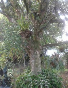 La modestia de los árboles es infinita. Cuando la brisa matinal los acaricia, ellos dejan caer dos hojas tiernas, y cuando el vendaval los agrede sin piedad, endurecen sus ramas como rejas. Su tronco recobra entonces la solidez de su origen, y el temporal se aleja, con lluvia de vencido. Benedetti