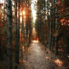Autumn sunset sky sunset outdoors trees autumn