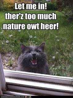 Visit Waverider @ http://www.waveridermp3.com #cat humor #brainwaves