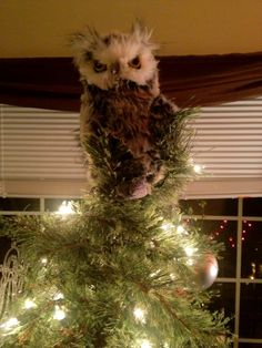 Owl Tree Topper Tree Toppers – Bronner's Christmas... | Shop food ...