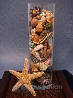 Image from http://www.seashells.net.au/images/DISPLAYS/Tall_Glass_MLMSt_500x.jpg.