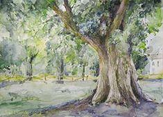 Como los árboles suele ser uno de mis temas favoritos, empieza la entrada con una acuarela basada en unas fotos de los olmos centenari...