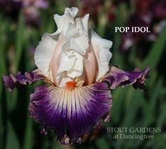 IRIS POP IDOL