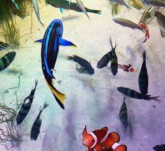 Domčurička Králiková (@domcuricka)  Looking for someone? #nemo #dorry #findingnemo #fish #aquarium #londonaquarium #london #londonvisit #ocean #sealife #sealifeaquarium #oceanlover #dory #perfectmoment #perfectpic #pixar #adventure #journey #vacay #follow #pinit #s7edge #s7edgephoto #samsung #samsunggalaxys7edge
