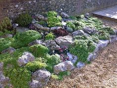 Zahradní skalky inspirace fotogalerie