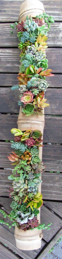 Succulents in Bamboo Hanger - Lovely Living Art! by SucculentSolutions on Etsy https://www.etsy.com/listing/192178275/succulents-in-bamboo-hanger-lovely