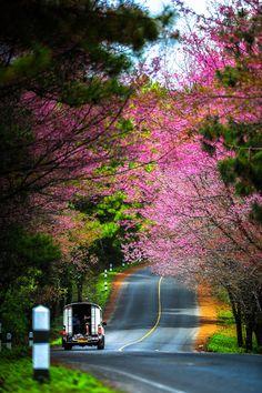 Ang Khang road, Chia