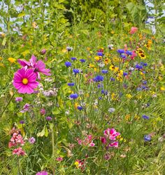 Here are some tips how to plant flower seeds for bees, butterflies, and other pollinators and beneficial insects to fix pollination in your organic garden.