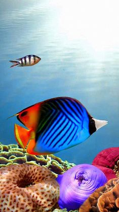 Colorful Fish 39