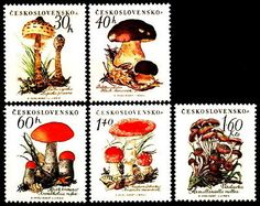12272 Czechoslovakia 1958 Mushrooms MNH | eBay