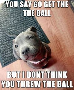 10 Reasons Staffordshire Bull Terriers Are The Worst Breed EVER