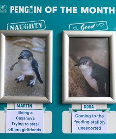 Naughty-Good-Penguin-Of-Month-National-Aquarium-New-Zealand