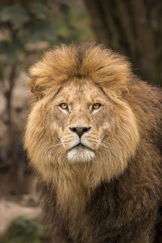 Beautiful nature & Animals - Comunidade - Google+