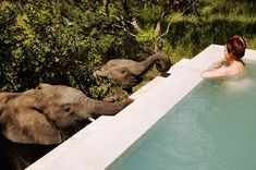 Yes, this is for real - every room at South Africa's luxurious Royal Malewane has a private pool and this could be you. Photo: Royal Malewane When most people go on vacation to South Africa, they go on safari. And when people go on a luxury safari to Sout Mauritius, Parc National Kruger, Places To Travel, Places To Go, Cap Vert, Game Lodge, Le Cap, Game Reserve, African Safari