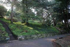 Buena Vista Park- hop off the bus on Haight St and walk in to the oldest park in San Francisco. Walk up the path among the live oaks,  relax and enjoy the views from the top of this park.