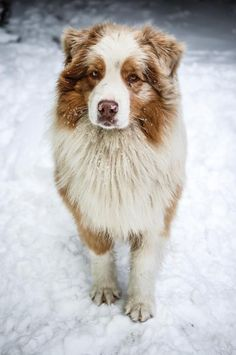 Reminds me of when Angel was able to spend her last Christmas in the snow :) she loved it
