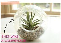Make a mini terrarium from old light fixtures! #DIY
