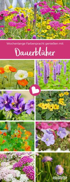 Die besten Dauerblüher: langblühende Stauden und Bodendecker Long-flowering perennials delight us with their colors from spring to the first frost. Here you will find the most beautiful permanent bloomers for the garden and balcony. Garden Cactus, Bog Garden, Water Garden, Shade Garden, Deciduous Trees, Trees And Shrubs, Roses Pink, Logo Fleur, Companion Planting Chart