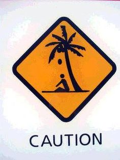 Caution - coconuts fall from trees