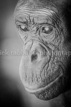 Monkey Fine Art Photography Animal by PatrickRabbatPhotos on Etsy