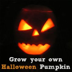 End of April/May is the ideal time to start growing your pumpkins for next Halloween with the kids - here's how to go about getting them off to the best start