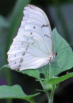 Butterfly by Jeremy Hayden