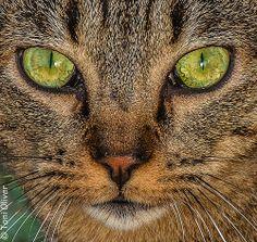 Esos ojos verdes…..