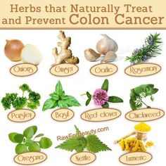 Herbs that naturally treat and prevent Colon Cancer.