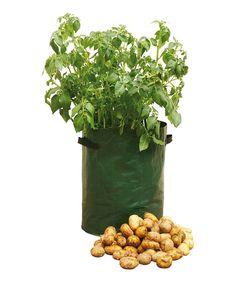 Take a look at this Potato Patio Planter - Set of Three today!