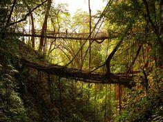 "Self-strengthening ""living bridges"" in Mawsynram, India"