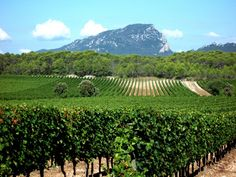 How about the ultimate guide to the Languedoc Roussillon wine region to get you started on your wine adventures.