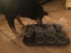 Hundebeschäftigung für Drinnen