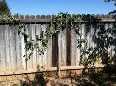 my fence