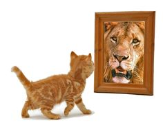 "Lion and Kitten: a fluffy, white kitten gazing in the mirror.  Staring back in the kitten's reflection was a statuesque lion crowned with a gorgeous main. The caption read, ""What matters most is how we see ourselves."""