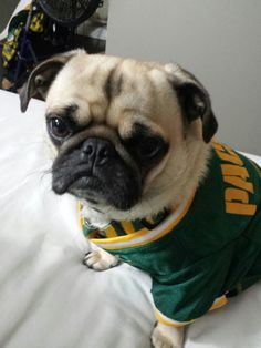 Packers pug