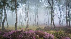 florestas9